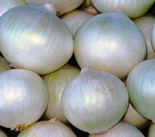 Onion White Sweet Spanish Vegetable Seeds