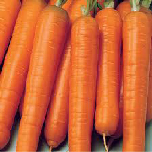 Carrot Early Nantes 2 1400 Vegetable Seeds