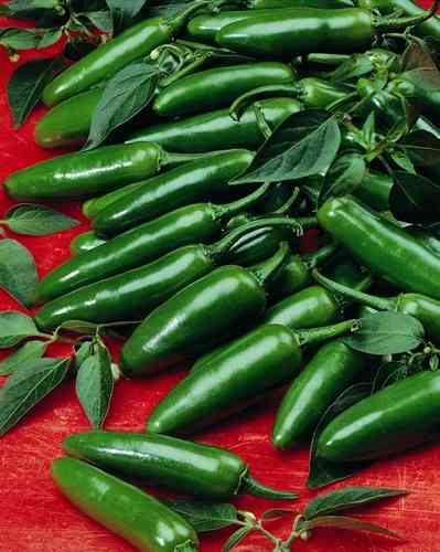Serrano Hot Chili Pepper 90 Vegetable Seeds