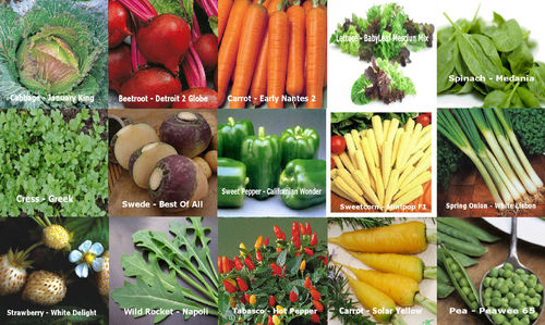 15 Packs of Vegetable Seeds SWEDE CARROT PEPPER