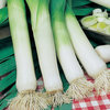 Leek Musselburgh Vegetable Seeds