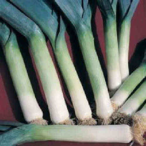 Leek Winter Giant 3 100 x Vegetable Seeds