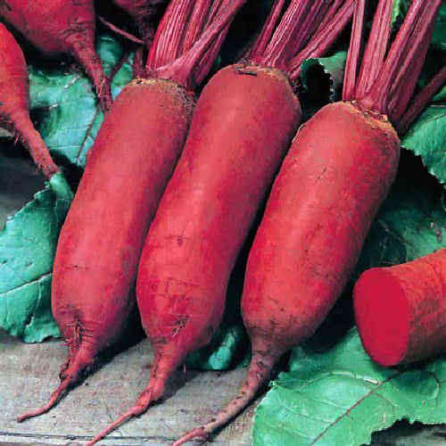 Beetroot Cylindra 200 (3g's) Vegetable Seeds