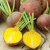 Beetroot Golden Globe Vegetable Seeds