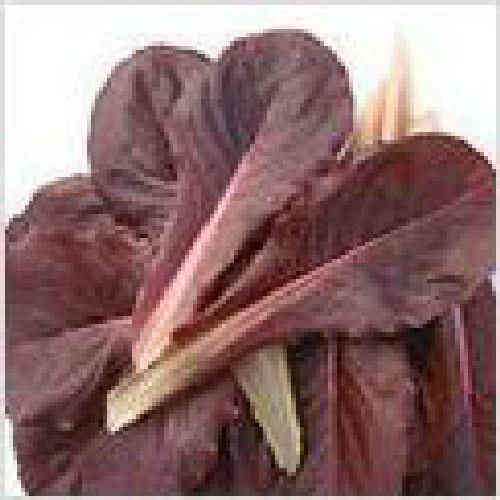 Lettuce Red Cos Vegetable Seeds