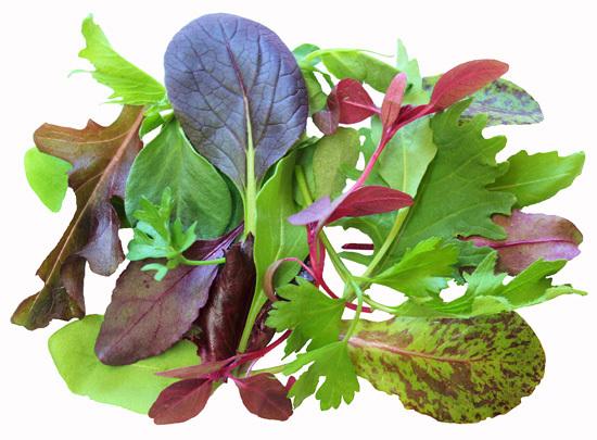 Lettuce Herb Blend BabyLeaf Mix Vegetable Seeds - VIRIDIS ...