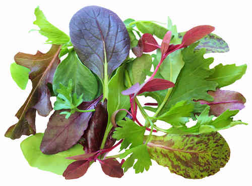 Lettuce Herb Blend BabyLeaf Mix Vegetable Seeds