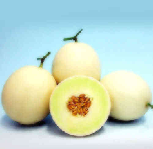 Melon F1 Jade Lady 8 Fruit Seeds