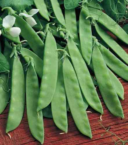 Pea Oregon Sugar Pod Mangetout Vegetable Seeds