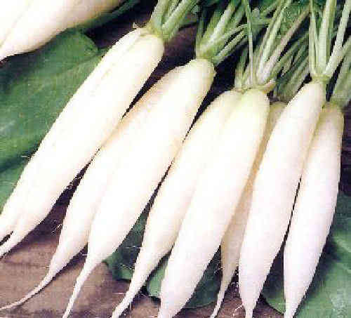 Radish Long White Icicle 300 Vegetable Seeds