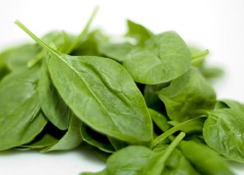 Spinach Medania 600 5.5g Vegetable Seeds