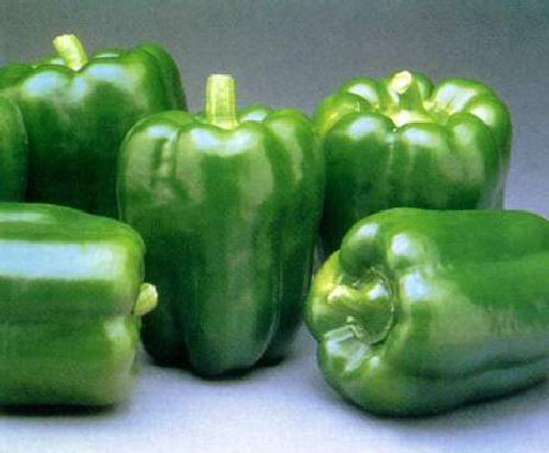 Californian Wonder Sweet Pepper Seeds *FREE P&P*