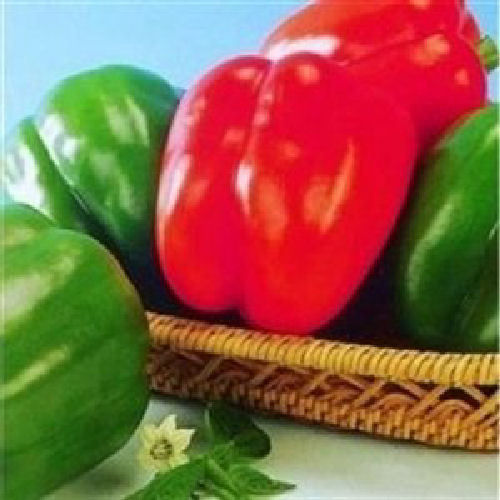 Poseidon F1 Sweet Pepper Vegetable Seeds