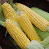Sweetcorn, Earlibird F1 Vegetable Seeds