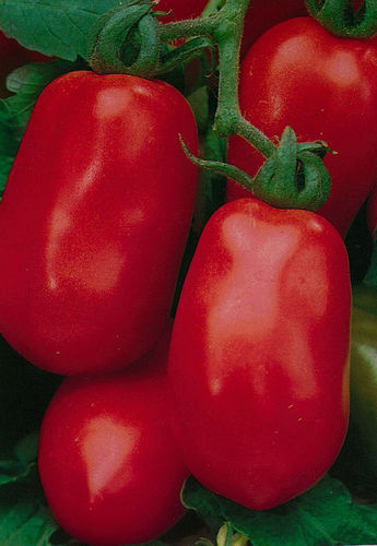 Tomato Roma VF 40 Vegetable Seeds