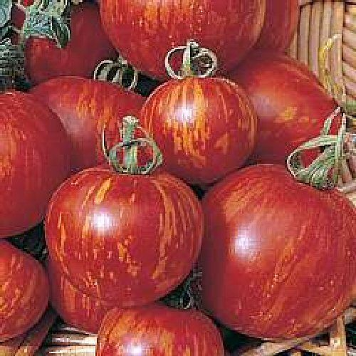 Tomato Tigerella 25 Vegetable Seeds