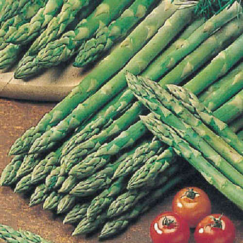 Asparagus Connovers Colossal Vegetable Seeds