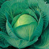 Cabbage Sherwood F1 25 Vegetable Seeds