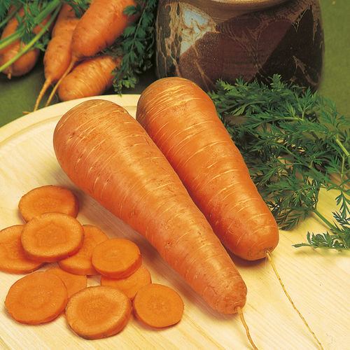 Carrot Autumn King 2 1400 Vegetable Seeds