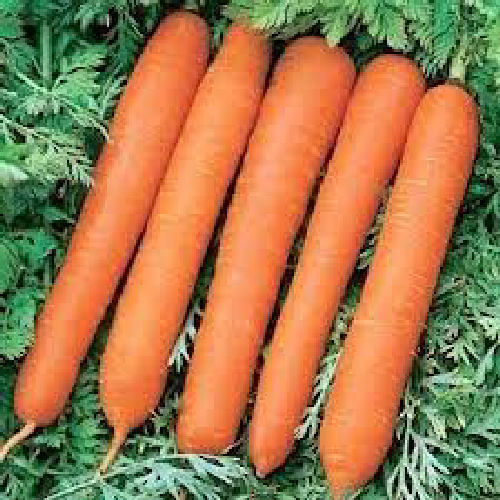 Carrot F1 Senior 450 Vegetable Seeds