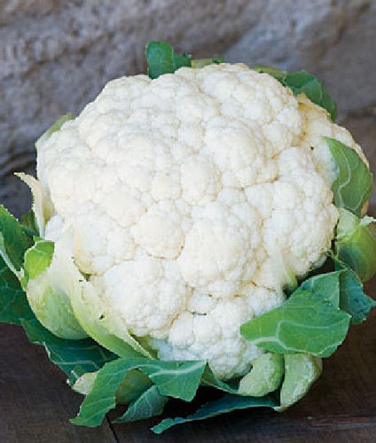 Cauliflower Snowball X 60 Vegetable Seeds