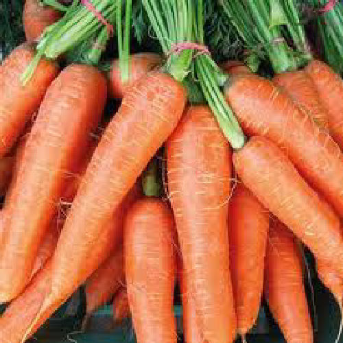 Carrot Flyaway F1 400 Vegetable Seeds