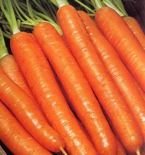 Carrot Trevor F1 400 Vegetable Seeds