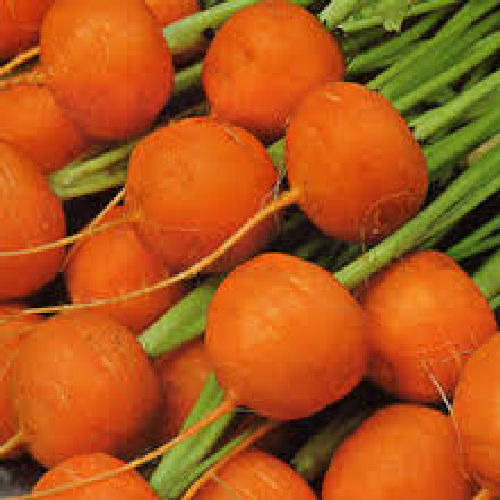 Carrot Paris Market Atlas 1500 Vegetable Seeds