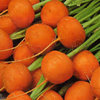 Carrot Paris Market Atlas 1600 Vegetable Seeds