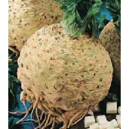 Celeriac Giant Prague 1500 Vegetable Seeds