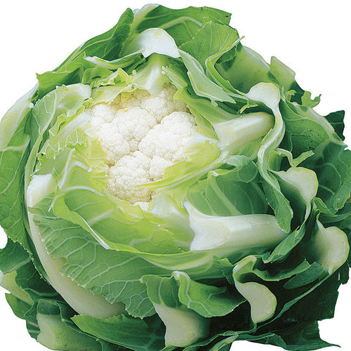 Cauliflower Triomphant F1 15 Vegetable Seeds