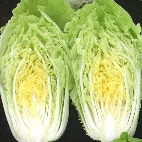 Chinese Cabbage 1625 F1 Early Variety 70 Seeds