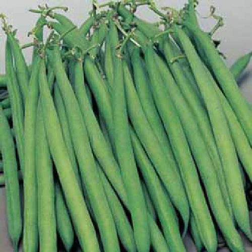 Dwarf French Bean Safari Vegetable Seeds