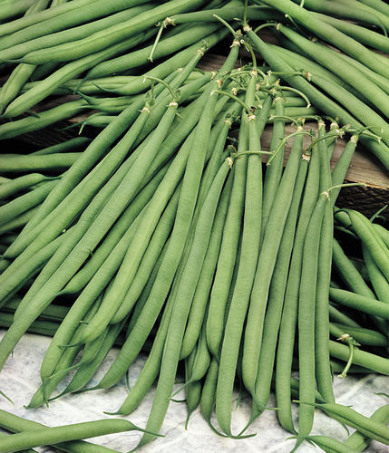 Dwarf  French Bean Stanley Vegetable Seeds