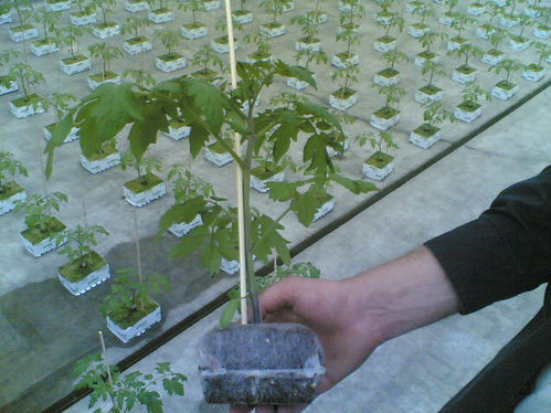 20 x Jiffy Propagation Grow Blocks 85mm x 85mm