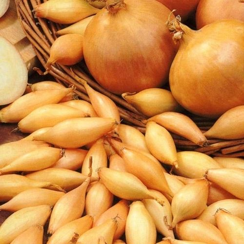 Onion Sets Stuttgarter 250g's Approx 80-100 Sets