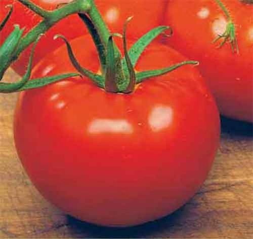 Tomato Ace 55 VF 50 Vegetable Seeds