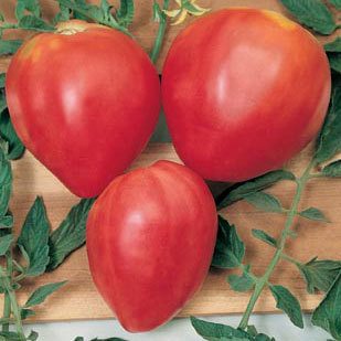Tomato - Oxheart Red 10 Vegetable Seeds