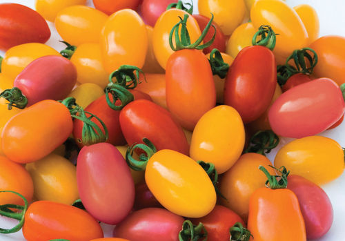 Tomato Rainbow Mix 12 Vegetable Fruit Seeds