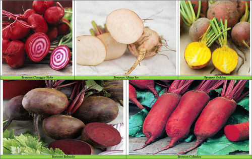 Beetroot Rainbow Mix 5 Varieties Seeds