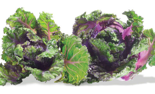 Kalettes formerly known as Flower Sprout 10 Seed