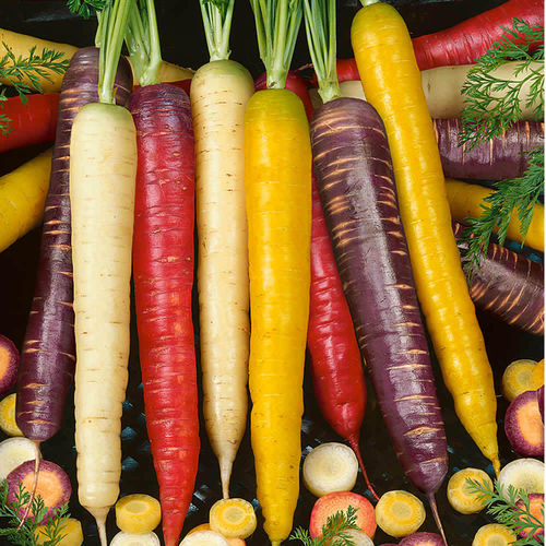 Carrot Rainbow Blend 400 Vegetable Seeds