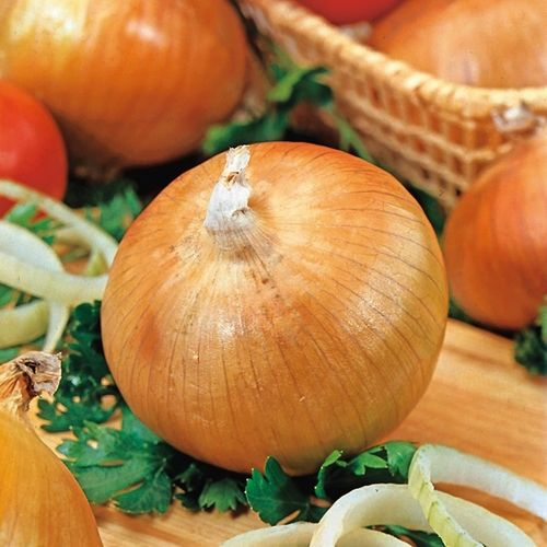 Onion Senshyu Yellow Globe (290) (1g) Seeds