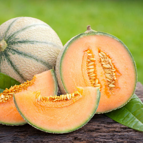 Melon Malaga F1 Fruit Seeds