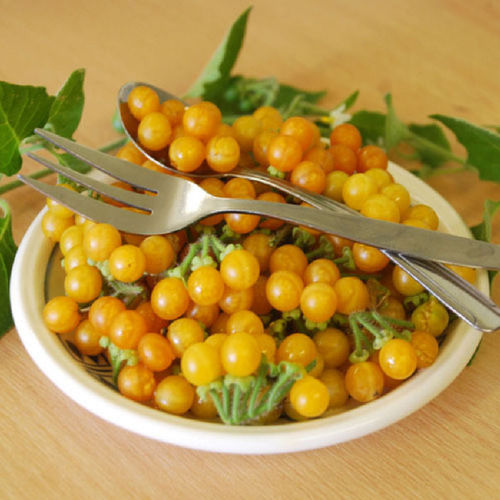 Golden Pearls Berry/Fruit Seeds
