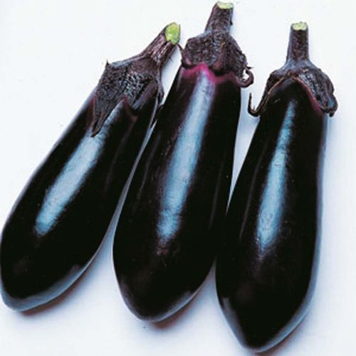 3 x Aubergine Moneymaker F1 Plug Plants